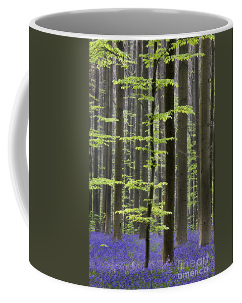 Bluebells Coffee Mug featuring the photograph 110506p244 by Arterra Picture Library