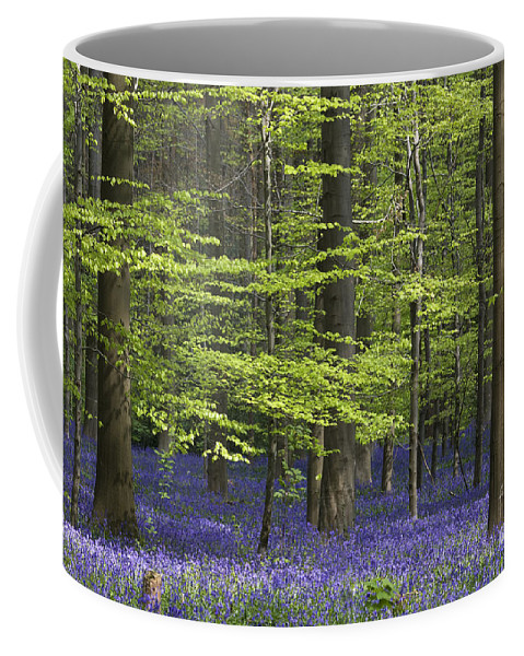 Bluebells Coffee Mug featuring the photograph 110506p248 by Arterra Picture Library