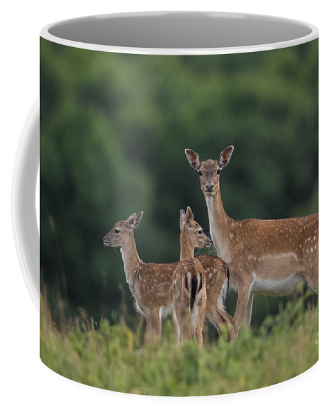 Fallow Deer Coffee Mug featuring the photograph 110613p159 by Arterra Picture Library