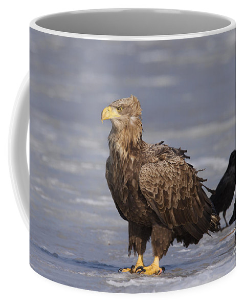 White-tailed Eagle Coffee Mug featuring the photograph 110613p227 by Arterra Picture Library