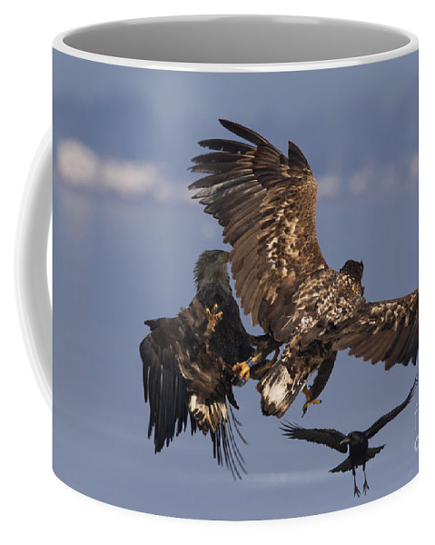 White-tailed Eagle Coffee Mug featuring the photograph 110613p229 by Arterra Picture Library