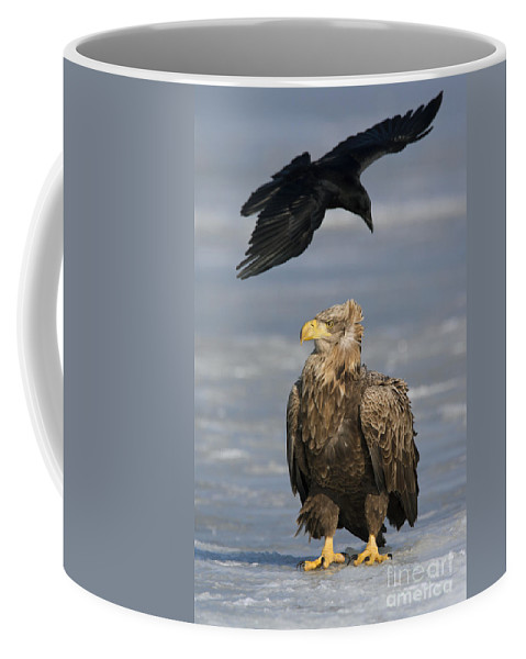 White-tailed Eagle Coffee Mug featuring the photograph 110613p230 by Arterra Picture Library