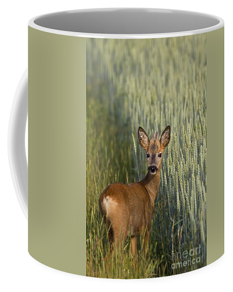 Roe Deer Coffee Mug featuring the photograph 110714p133 by Arterra Picture Library