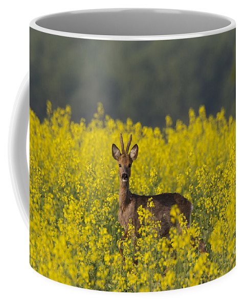 Roe Deer Coffee Mug featuring the photograph 110714p143 by Arterra Picture Library