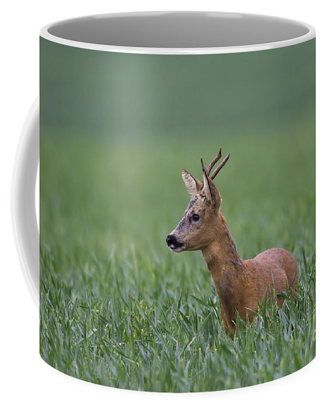 Roe Dee Coffee Mug featuring the photograph 110714p320 by Arterra Picture Library