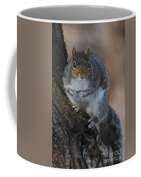 Squirrel Coffee Mug featuring the photograph Squirrel by Ken Keener