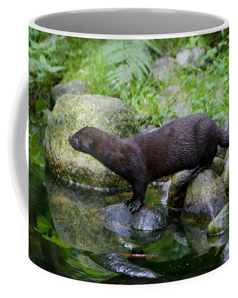 American Mink Coffee Mug featuring the photograph 121213p013 by Arterra Picture Library