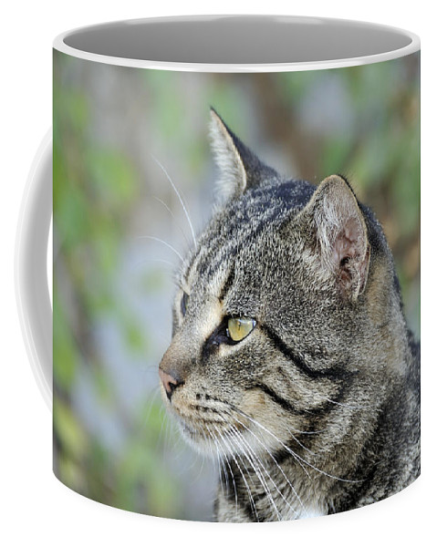 Cat; Cats; Feline; Tabby; Animal; Sit; Sitting; Rest; Resting; Portrait; Free; Alone; Greece; Hellas; Greek; Hellenic; Hydra; Argosaronic; Saronic; Gulf; Islands; Island; Holidays; Vacation; Travel; Trip; Voyage; Journey; Tourism; Touristic; Yellow; Eyes; Black; Stripes Coffee Mug featuring the photograph Cat In Hydra Island by George Atsametakis