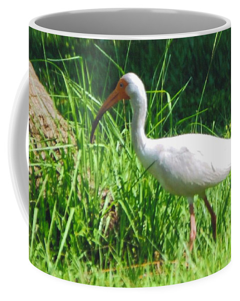 My Backyard Digging For Bugs Coffee Mug featuring the photograph White Ibis by Robert Floyd