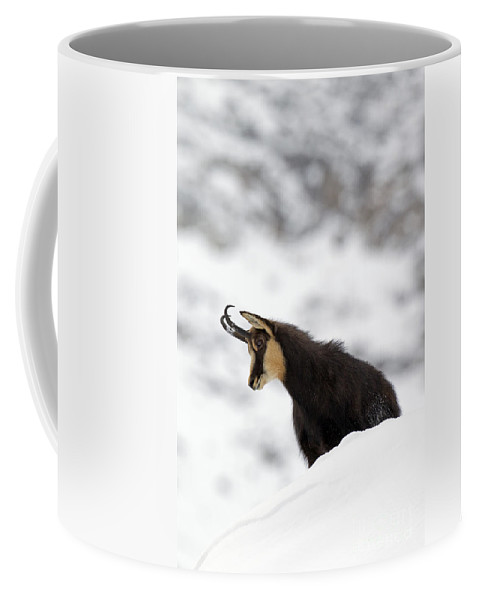 Chamois Coffee Mug featuring the photograph 130201p229 by Arterra Picture Library