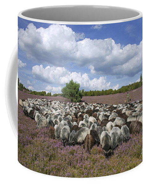 Heidschnucke Coffee Mug featuring the photograph 131114p166 by Arterra Picture Library