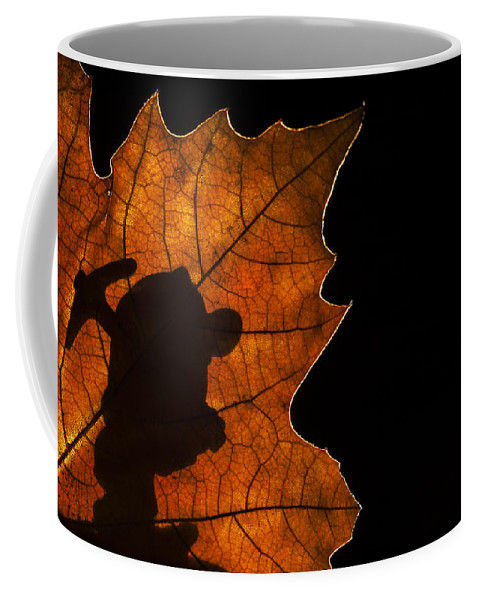 Dwarf Coffee Mug featuring the photograph Going To Work by Arterra Picture Library