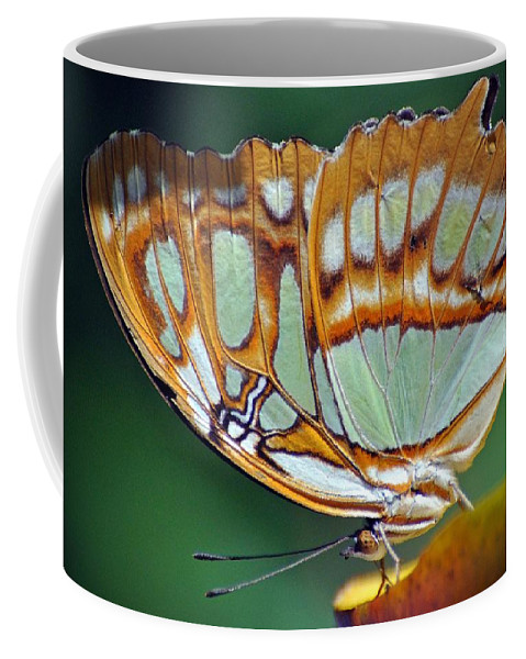Butterfly Coffee Mug featuring the photograph Butterfly by Savannah Gibbs