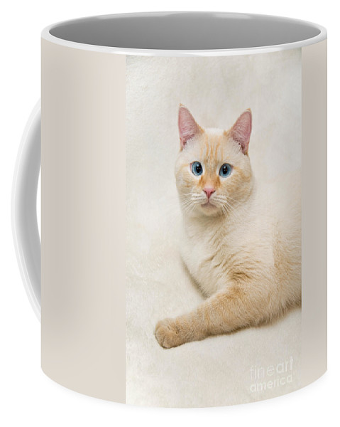Blue Eyes Coffee Mug featuring the photograph Flame Point Siamese Cat by Amy Cicconi