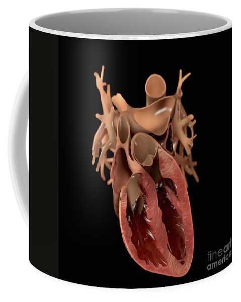 Circulation Coffee Mug featuring the photograph Heart Anatomy by Science Picture Co