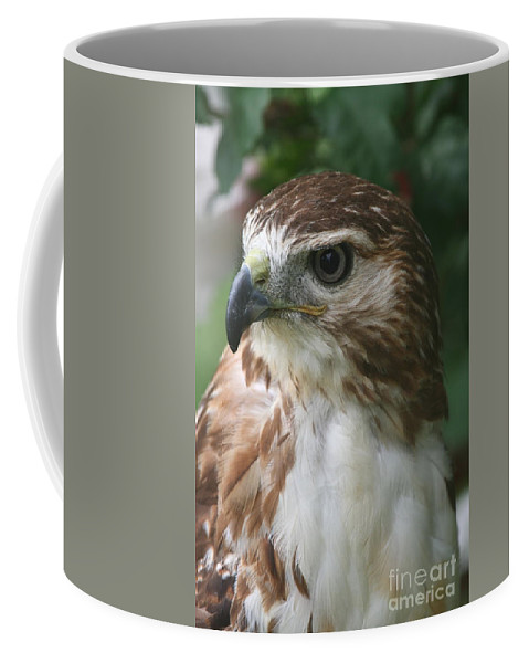 Hawk Coffee Mug featuring the photograph Red-tailed Hawk by Ken Keener