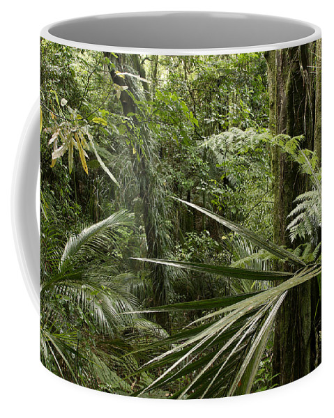 New Zealand Coffee Mug featuring the photograph Jungle Leaves by Les Cunliffe