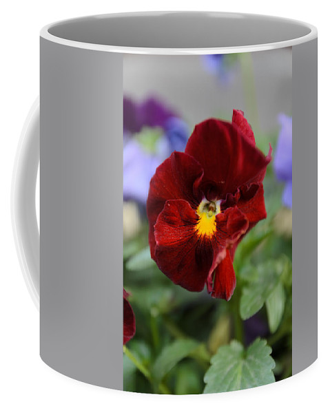 Art Coffee Mug featuring the photograph Viola Tricolor Heartsease by Michael Goyberg