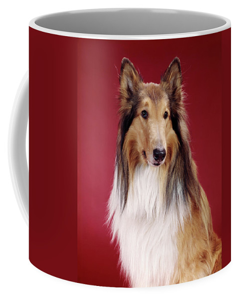 Photography Coffee Mug featuring the photograph 1960s Portrait Of Collie Dog On Red by Vintage Images
