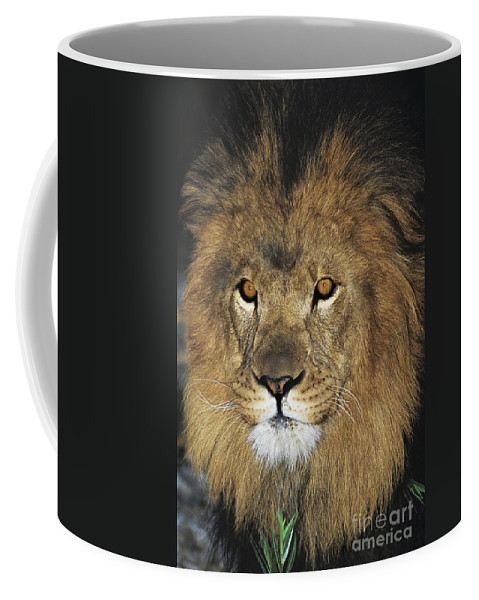 African Lion Coffee Mug featuring the photograph African Lion Portrait Wildlife Rescue by Dave Welling
