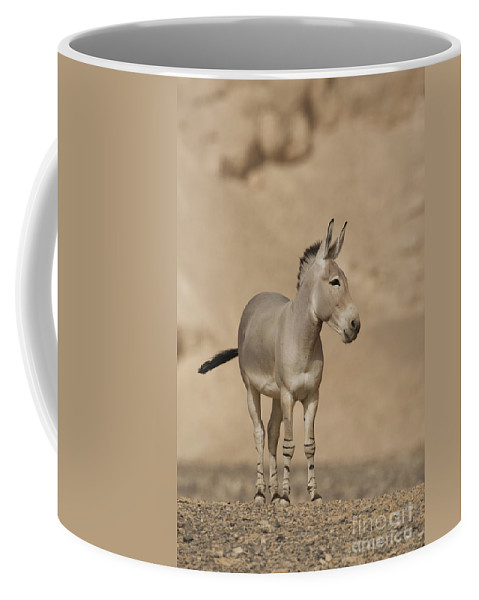 African Wild Ass Coffee Mug featuring the photograph African Wild Ass Equus Africanus by Eyal Bartov