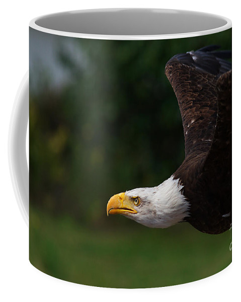 American Coffee Mug featuring the photograph American Bald Eagle In Flight by Nick Biemans