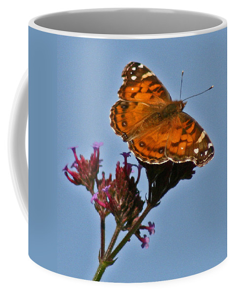 American Lady Coffee Mug featuring the photograph American Lady Butterfly by Karen Adams