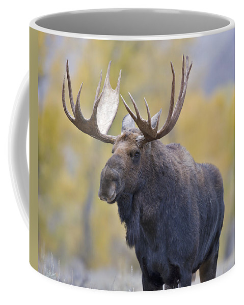 Autumn Coffee Mug featuring the photograph Autumn Bull Moose IIi by Gary Langley