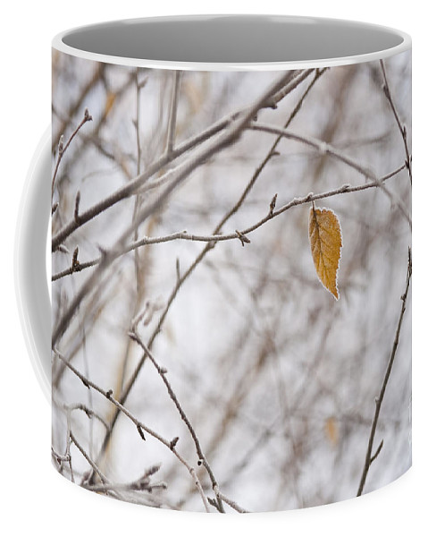 Pacific Northwest Coffee Mug featuring the photograph Autumn Leaf by Jim Corwin