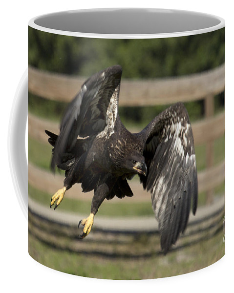 Bald Eagle Coffee Mug featuring the photograph Bald Eagle In Flight Photo by Meg Rousher