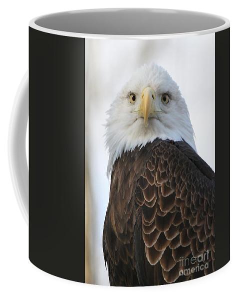 Bald Coffee Mug featuring the photograph Bald Eagle by Ken Keener
