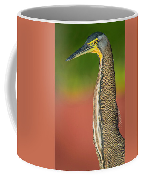 Photography Coffee Mug featuring the photograph Bare-throated Tiger Heron Tigrisoma by Panoramic Images