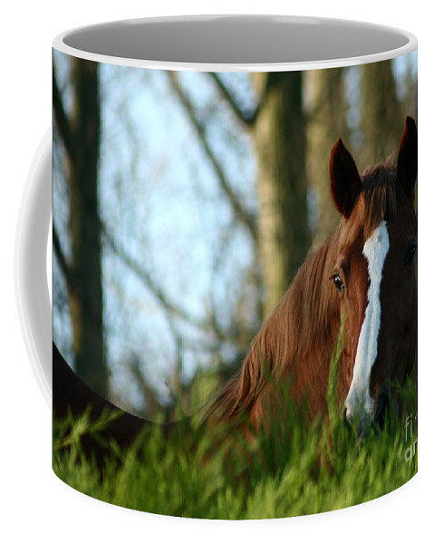 Chestnut Horse Coffee Mug featuring the photograph Behind The Fence by Angel Ciesniarska