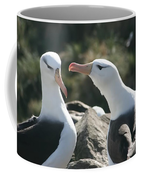 Nesting Albatross Coffee Mug featuring the photograph Black Browed Albatross Pair by Amanda Stadther
