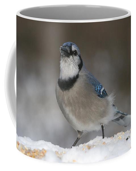 Bird Coffee Mug featuring the photograph Blue Jay by Ken Keener