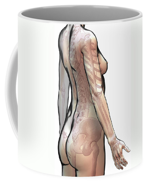 Digitally Generated Image Coffee Mug featuring the photograph Bones Of The Upper Body Female by Science Picture Co
