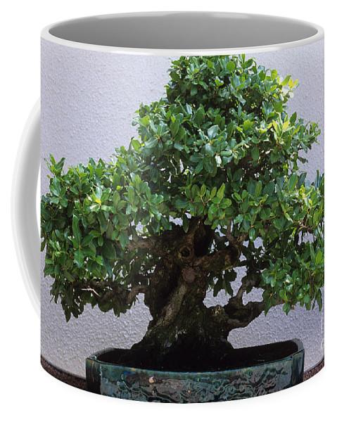 Bonsai Tree Coffee Mug For Sale By J C Hurni