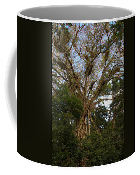 Australia Coffee Mug featuring the digital art Cathedral Fig Tree by Carol Ailles