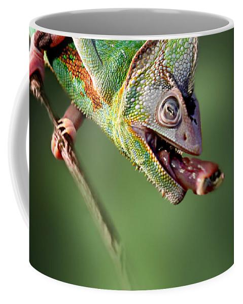Lizard Coffee Mug featuring the photograph Chamaeleon by Heike Hultsch