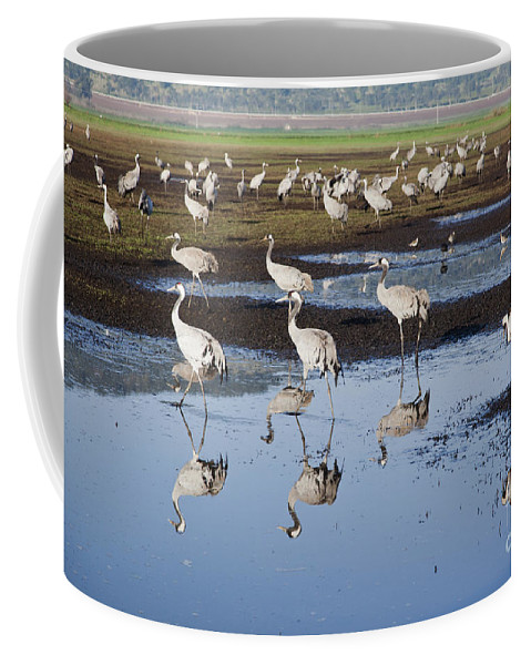 Migratory Coffee Mug featuring the photograph Common Crane Grus Grus by Eyal Bartov