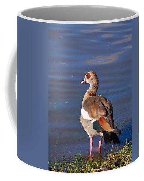 Alankomaat Coffee Mug featuring the photograph Egyptian Goose by Jouko Lehto