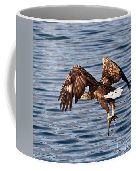 White_tailed Eagle Coffee Mug featuring the photograph European Fishing Sea Eagle 4 by Heiko Koehrer-Wagner