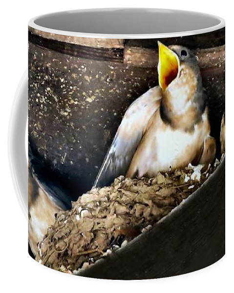 Bird Coffee Mug featuring the photograph Feed Me by Art Dingo