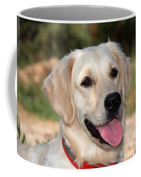 Dog; Golden Retriever Coffee Mug featuring the photograph Golden Retriever Dog by George Atsametakis