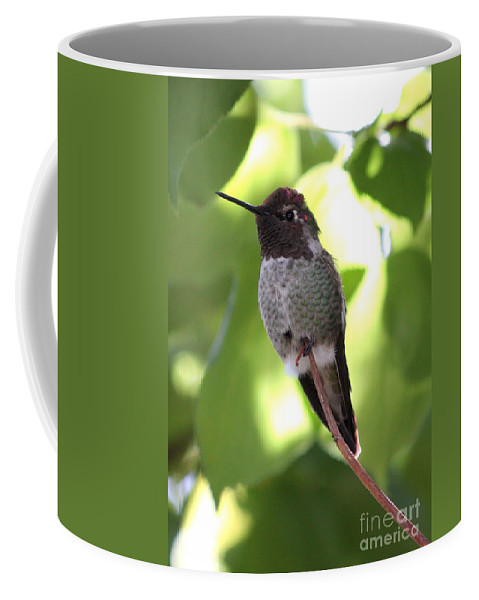 Hummingbird Coffee Mug featuring the photograph Hummingbird Hangout by Carol Groenen