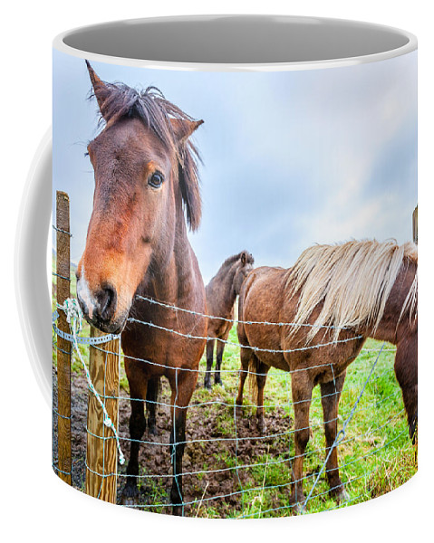 Europe Coffee Mug featuring the photograph Icelandic Ponies by Alexey Stiop