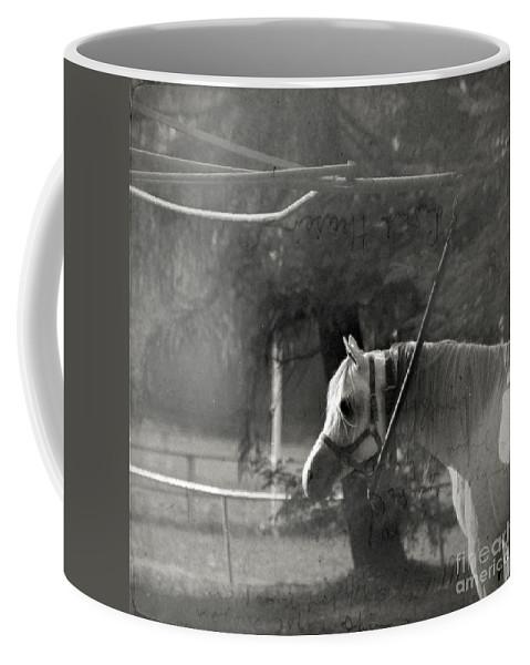 Horse Coffee Mug featuring the photograph In The Captivity by Angel Tarantella