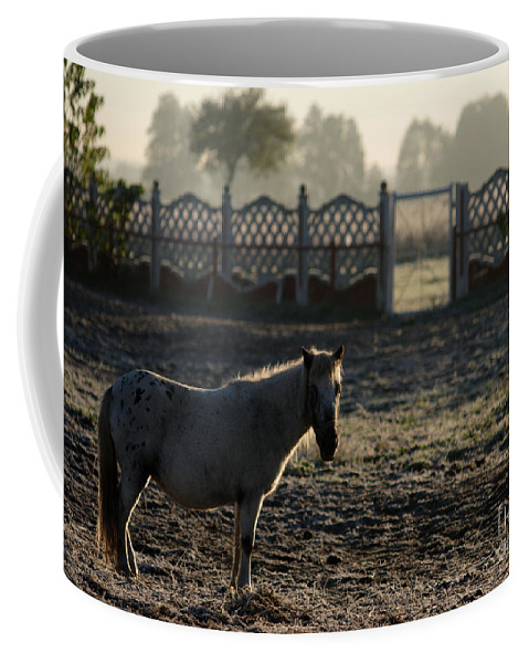 Dawn Coffee Mug featuring the photograph In The Frosty Morning by Angel Ciesniarska
