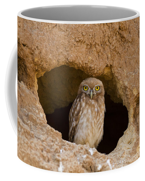 Animal Coffee Mug featuring the photograph Little Owl Athene Noctua by Eyal Bartov
