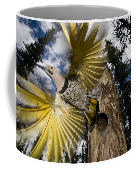 Michael Quinton Coffee Mug featuring the photograph Northern Flicker Leaving Nest Cavity by Michael Quinton